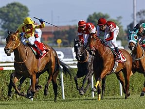 Strike the Gold Sires Turkish Oaks Winner