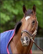 Barbaro Continues in Stable Condition