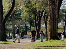 Grand Slam Filly Tops Keeneland Session
