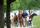 Keeneland Sale Still Up--And So Is Morale