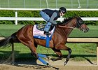 Baffert May Not Enter Filly in Kentucky Oaks