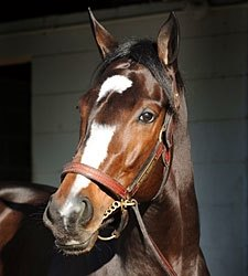 Rachel Alexandra Covers Half-Mile in :50.40