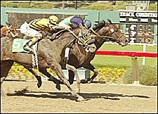 Grade I winner Joey Franco Retired