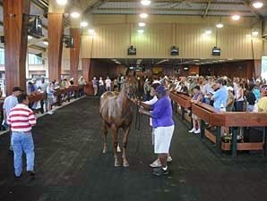 OBS Fall Mixed Sale Has 677 Horses