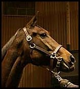 Our Dani, Dam Of You, Brings $625,000 At Keeneland