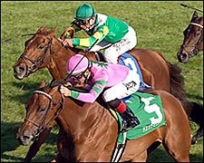 Grade I Winner Ticker Tape Retired