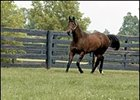 Leading North American Sire in 2004: Elusive Quality