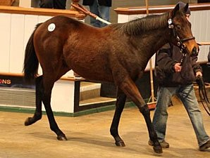 Prices Fall for Tattersalls Foals