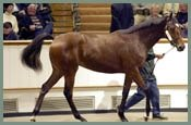 Tattersalls Houghton Yearling Sale Posts Increases In Average And Median