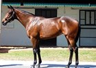 Street Sense Filly Sells for $475,000 at OBS