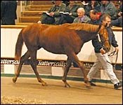 Numbers Rise at Tattersalls December Yearling Sale