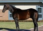Bernardini Scores First Winner at Hollywood