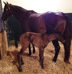Dynaformer's Last Foal Is a Filly