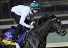 Royal Delta Set for Ladies' Classic