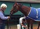 Preakness: American Pharoah Morning After