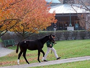 Keeneland Sale Softens on Day Nine