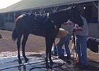 Kentucky Derby: Bathtime for American Pharoah