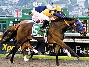 Cal Derby Top 3 Meet in El Camino Real Derby