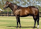 Redoute's Choice Weanling Leads Way