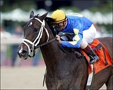 Eclipse Award: Ashado, Older Female