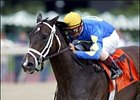 Ashado, Storm Flag Flying New Distaff Favorites