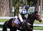 NY Panel Issues Plan for Retired Racehorses