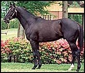 Sunday Silence Improving From Third Operation