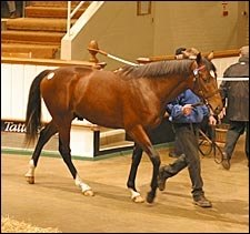 Sadler's Wells Colt Tops Tattersalls Yearling Auction