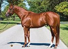Jimmy Creed to Spendthrift Australia