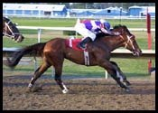 Easyfromthegitgo Hangs On to Win Iowa Derby