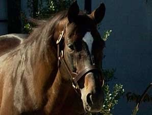Silver Hawk Euthanized