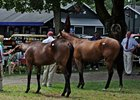 Saratoga Market Chatter: Stocks and Horses