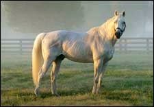 Maryland Stallion Waquoit Euthanized