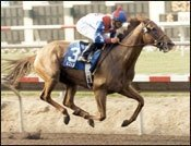 Azeri Only Unanimous Eclipse Award Winner; Four Horse of the Year Finalists