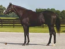Vinery Adds Three Stallions to Florida Roster