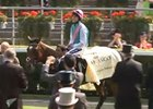 Royal Ascot - Lord Teddy Grimthorpe (Frankel)