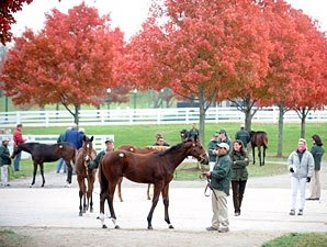 Bullish Market Continues at Keeneland Sale