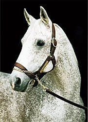 Spectacular Bid: How Good a Stallion?