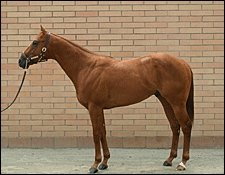 Red Bullet Colt Sells for $2.5 Million at Barretts