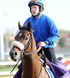 Biondetti Retired to Woodford Thoroughbreds