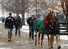 Median Rises at F-T Kentucky Winter Sale
