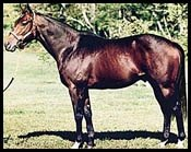 New York Stallion Dixie Brass Dead