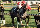1991 Horse of the Year Black Tie Affair Dead
