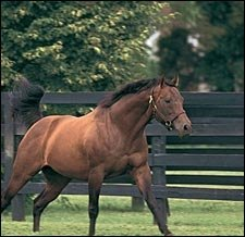 Glencrest Stallion Wavering Monarch Dead