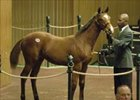 Weanlings Steal Show During Day Two of Keeneland November Breeding Stock Sale