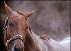 Funny Cide Even-Money Favorite for Belmont