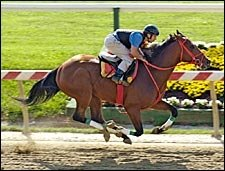 Afleet Alex Works at Pimlico; Ships to Belmont Saturday