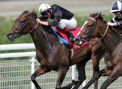 Filly & Mare Turf Preview: Still On Board