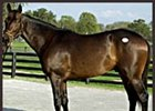 Awesome Action Tops Inaugural Adena Springs Auction