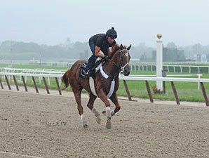 I'll Have Another Gallops at Belmont Park